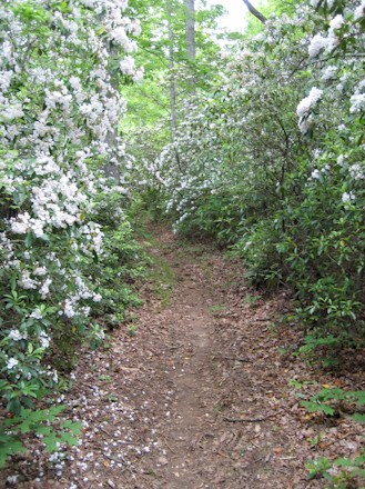 Mountain Laurel tunnel